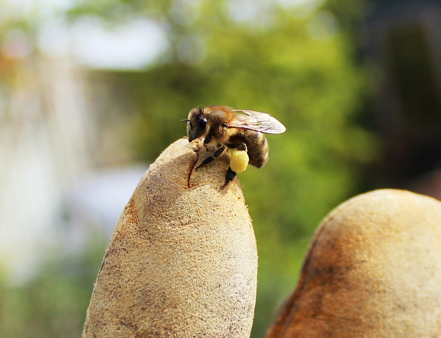 this is a bee on a finger raw honey