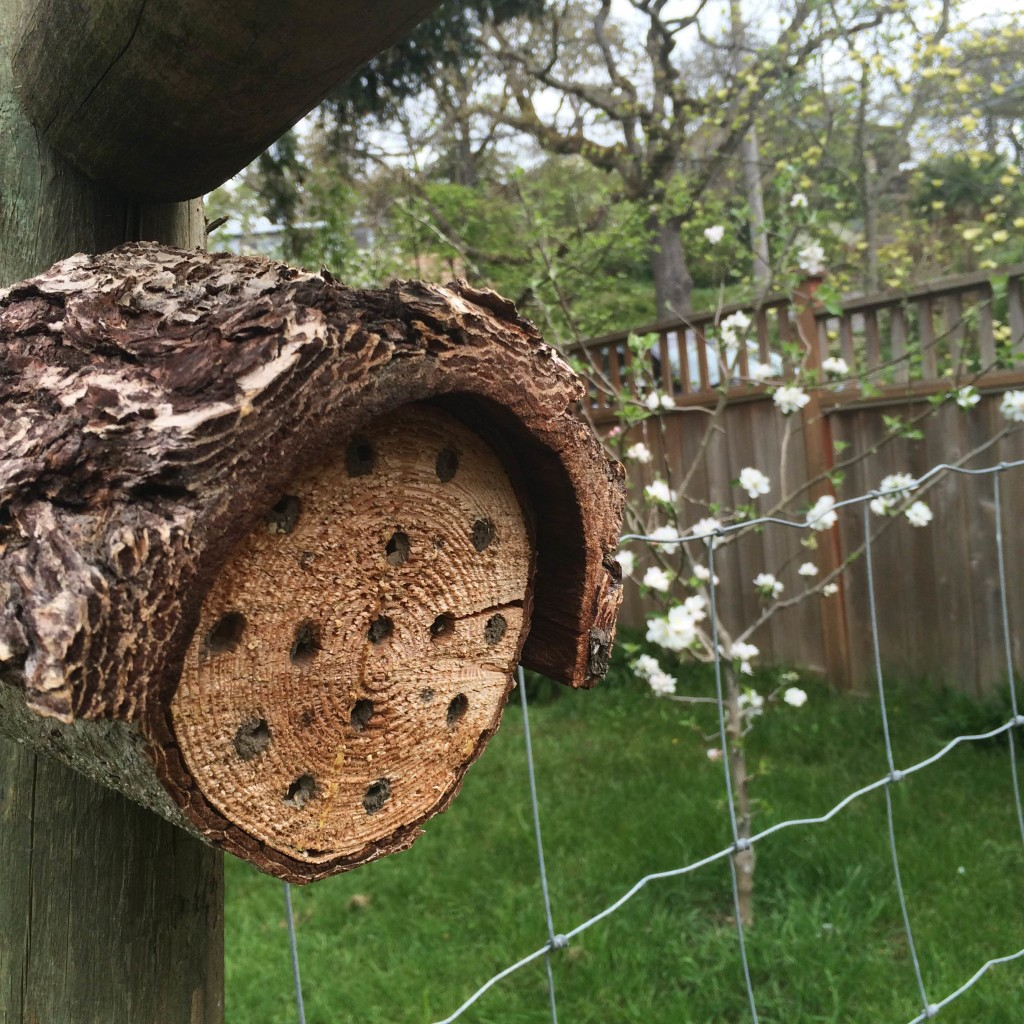 Easy do it your self mason bee house