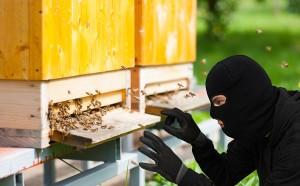 bee rustling hero